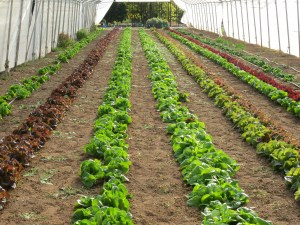 bob's farm 2